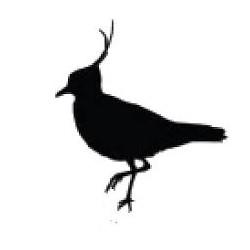 pegatina de pegueta o ave fría
