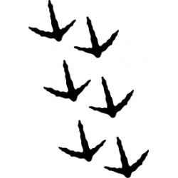 pisadas de ave